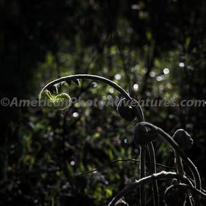 BlackwaterFalls_20140519_111