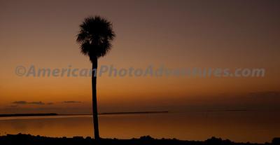Everglades2011_0090
