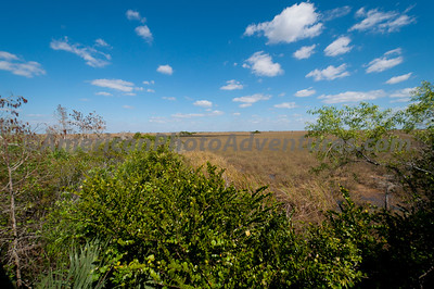 Everglades2011_0360