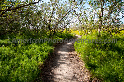 Took a hike from the Flamingo campgrounds towards the SE down this path.
