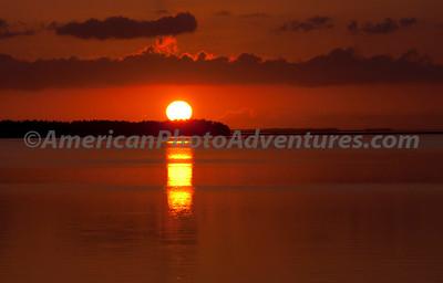 Everglades2011_0117