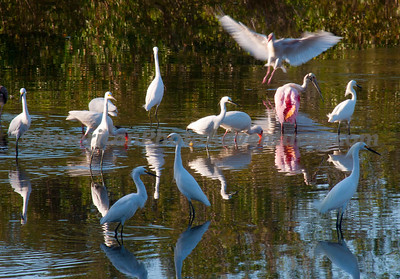 Everglades2011_0271
