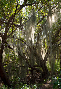Everglades NP.