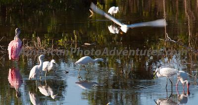 Everglades2011_0280