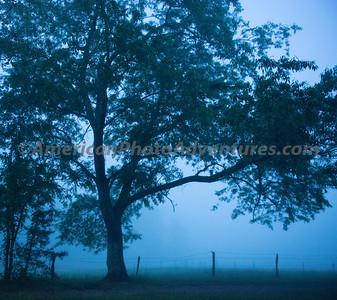 SmokeyMountNP_20130520_0010