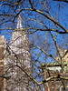 Empire State Building and Trees