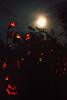 Pumpkins under the Moon