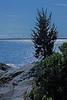 Narragansett Bay in Moonlight Effect
