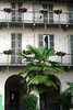 Windows with Palms and Flowerboxes