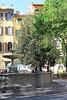 Fountain and Buildings in Piazza  Santo Spirito