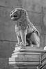 San Stefano Basilica - Lion