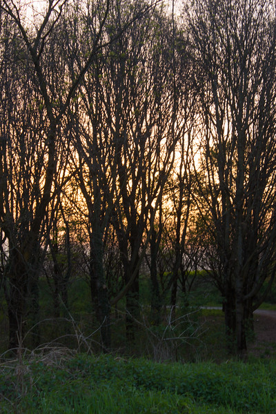 Sunset Behind a Woods