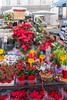 Siracusa - Christmas Decorations
