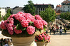 Baden - View with Flowerpots