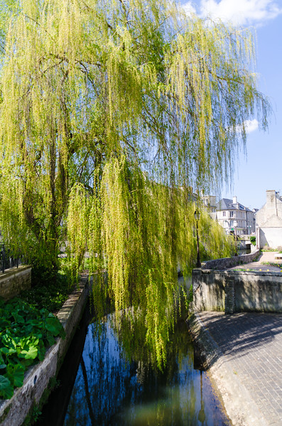 Weeping Willow in Bayuex, FR