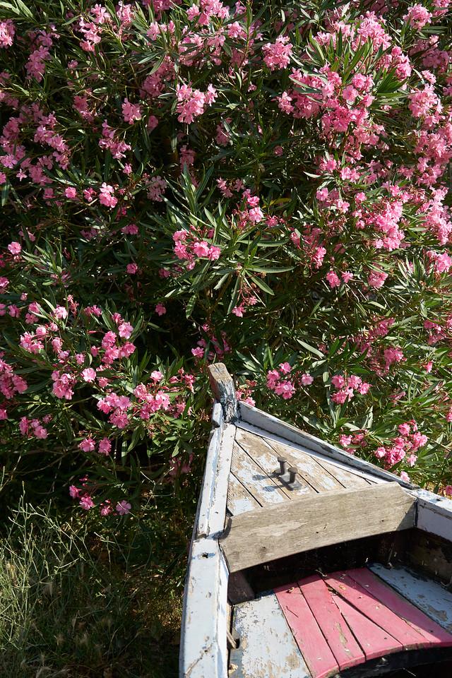 Boat in Oleander near canal du Midi Trebes