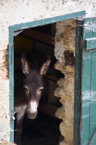 Donkey greets the day St Polycarpe