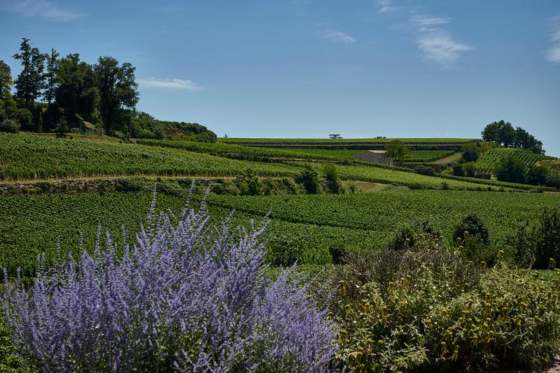 Lavender and green St Emilion