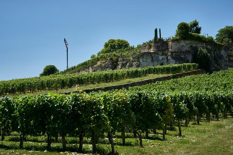 St Emilion vineyard