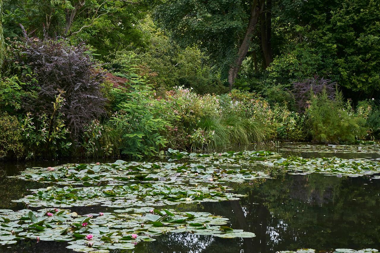 Lily pond 3