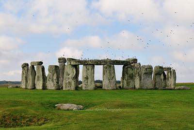 Birds liking Stonehenge