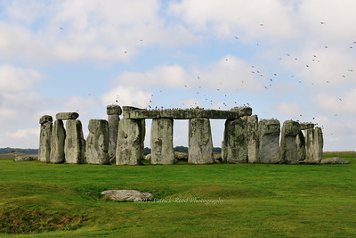 Birds liking Stonehenge