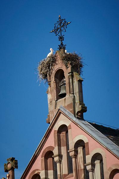 Storks nesting Eguisheim