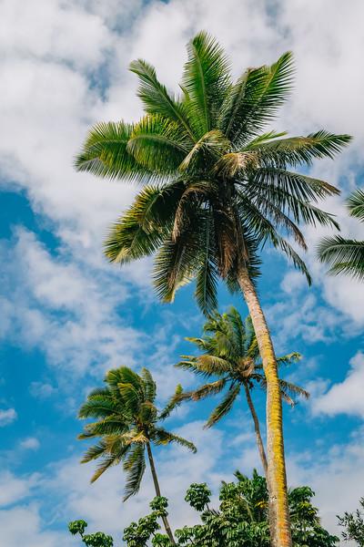 Fiji 2019 - Pacific Harbour_06