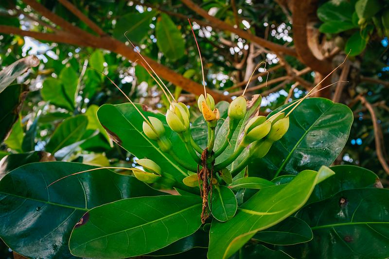 Fiji 2019 Waruka Bay Resort_21