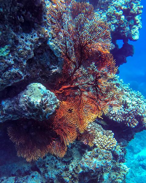 Fiji 2019 Yanuca Island_18