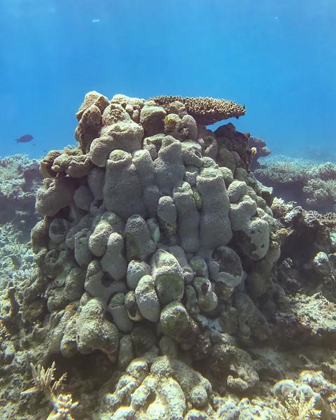 Fiji 2019 Yanuca Island_23