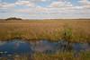 Everglades National Park 12-30-09
