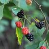 Berries!