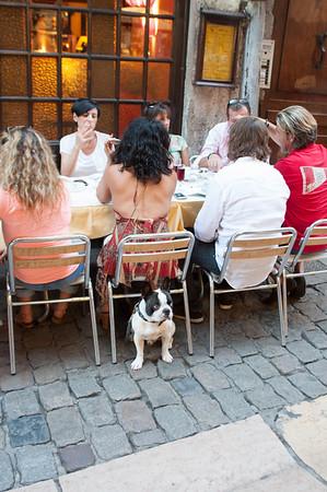 A French Bulldog.