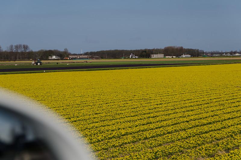 Keukenhoff, Fields of Flowers