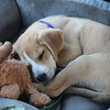 Porter and his moose, sleeping.