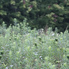 Meadow detail