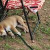 Porter sleeping