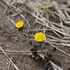Mystery flower @ Thelma Dare