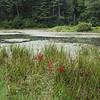 9-3-2020: Braley Pond
