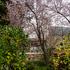 Blossoms in the Garden Tomb area