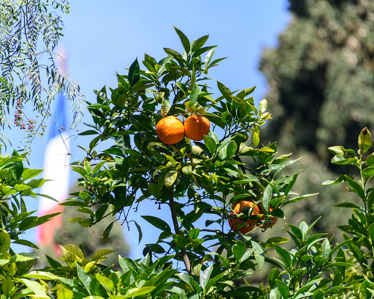Oranges in Israel -- in the not very distant past they were the cash crop of the country, number one export.