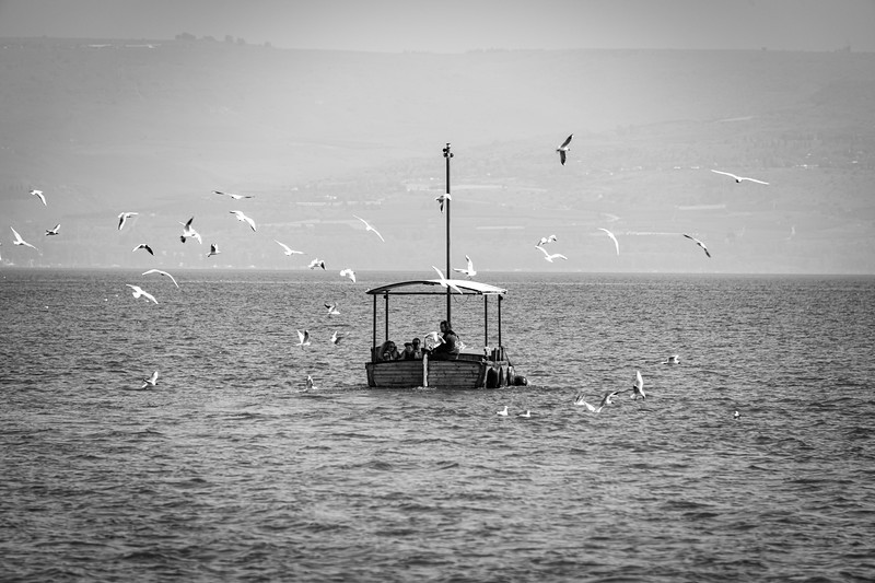 A flock of seagulls over a small boat on the Sea of Galilee.