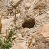 One of the multiple caves offering shelter at Ein Gedi.