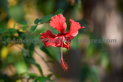 Bandvargarh_20190410_0403