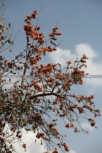 To Bandhavgarth_20190410_0076