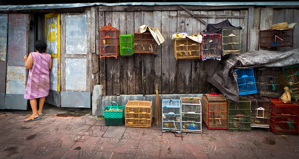 Small bird market, Yogyakarta