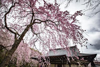 Garden at Tenryu-ji
