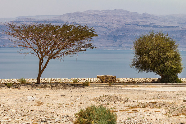 Some of the vegetation along the banks of the Dead Sea