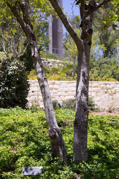Schindler's Tree